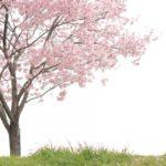 杉咲花の髪型が変!前髪ありの評判は?『花晴れ』江戸川音の役作りについて調べてみた。